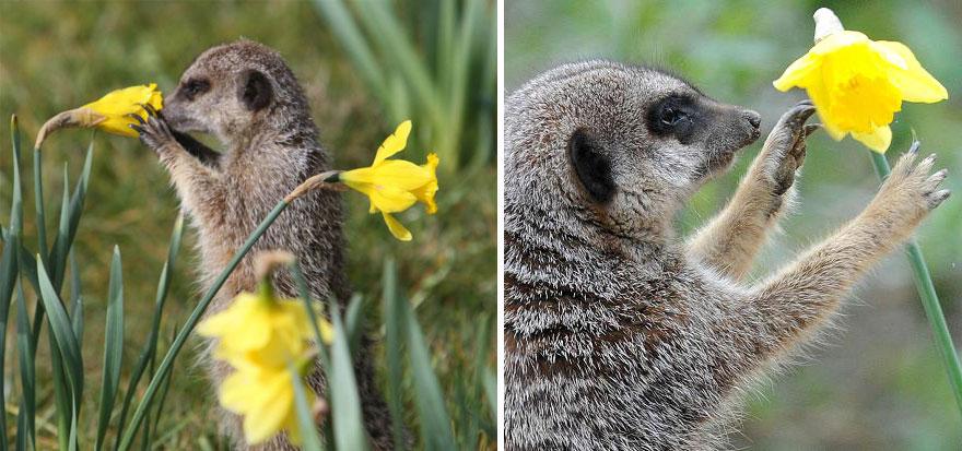 zwierzęta wąchające kwiaty