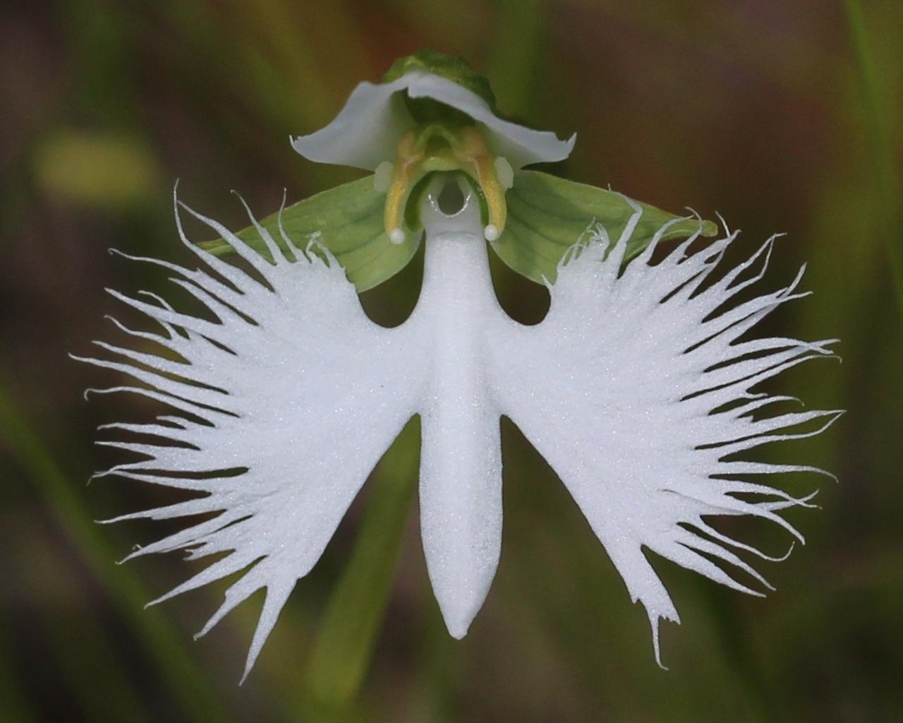 najdziwniejsze kwiaty świata