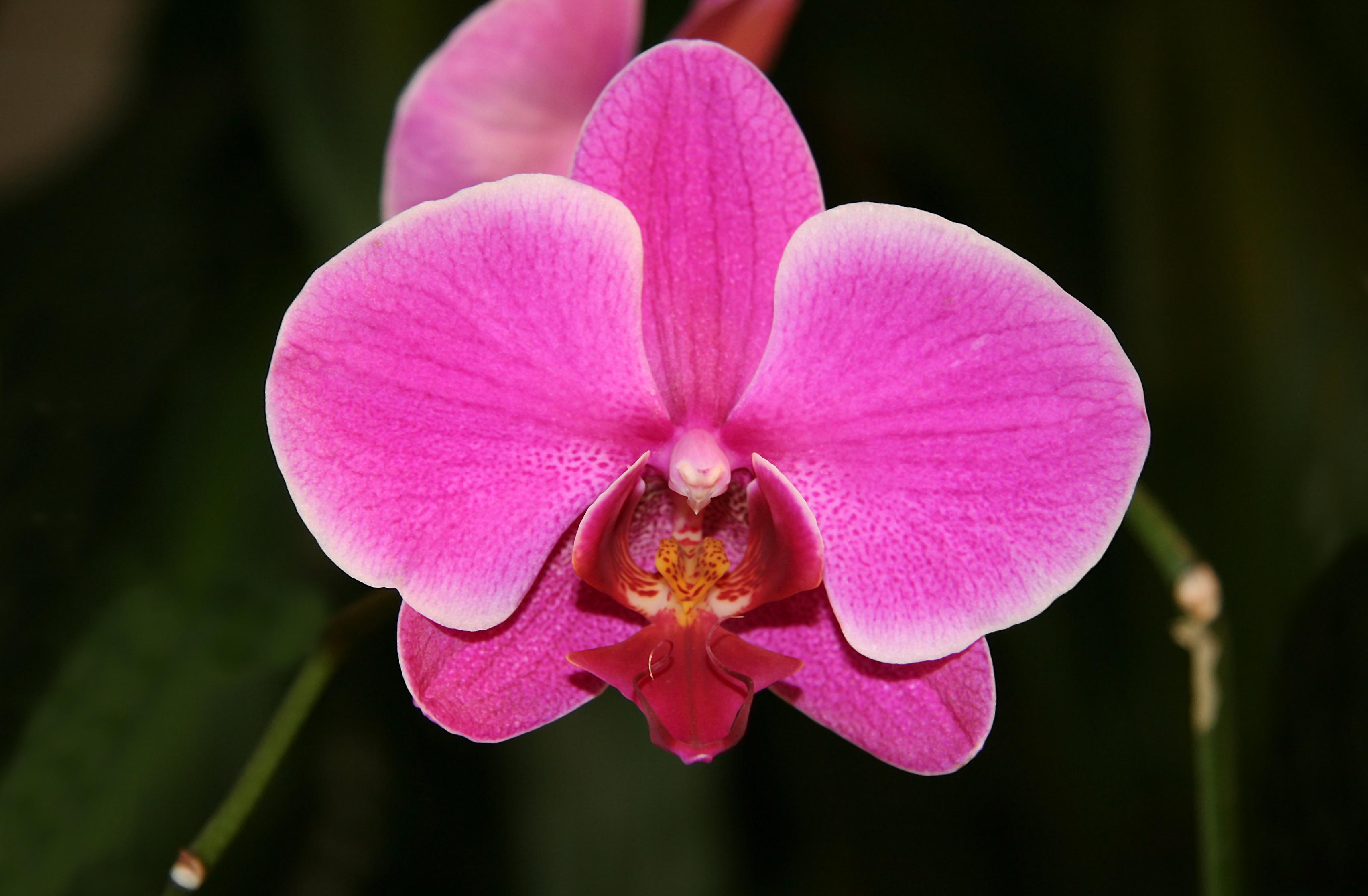najdziwniejsze rośliny świata