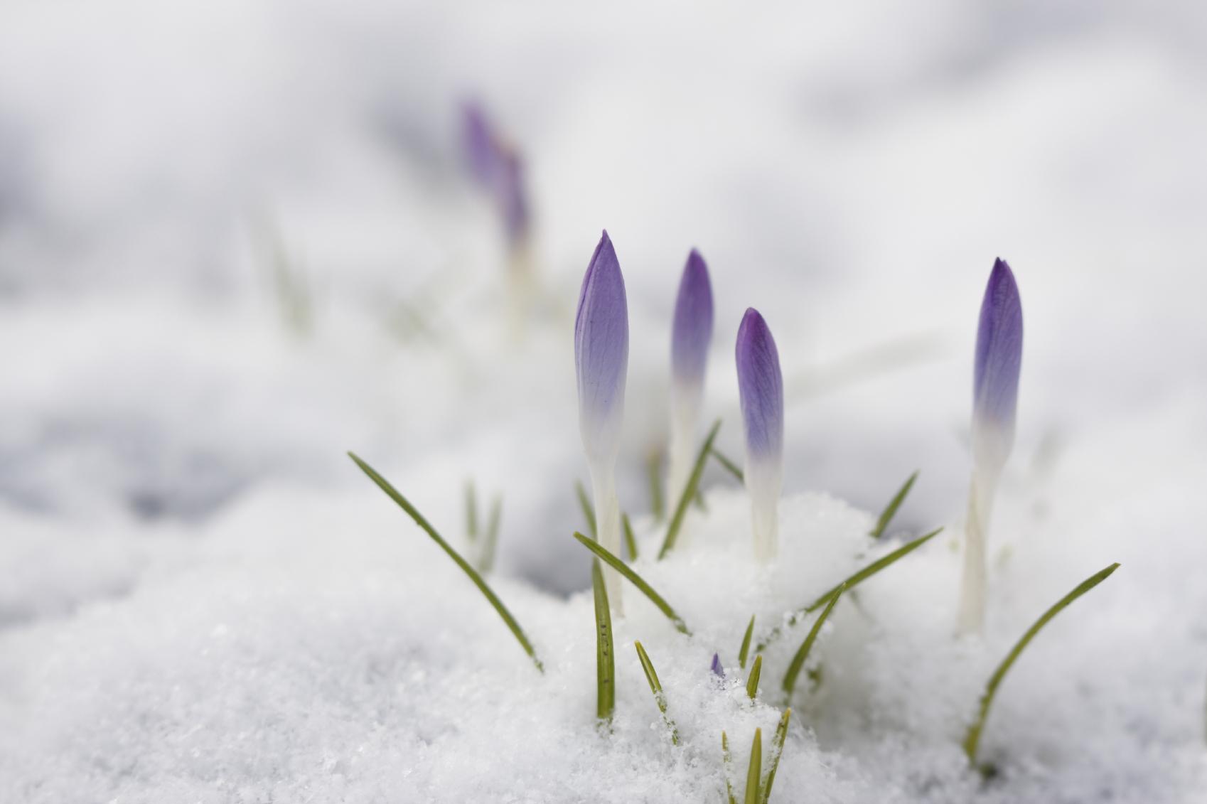 Przewodnik dla Twojego ogrodu wiosennego