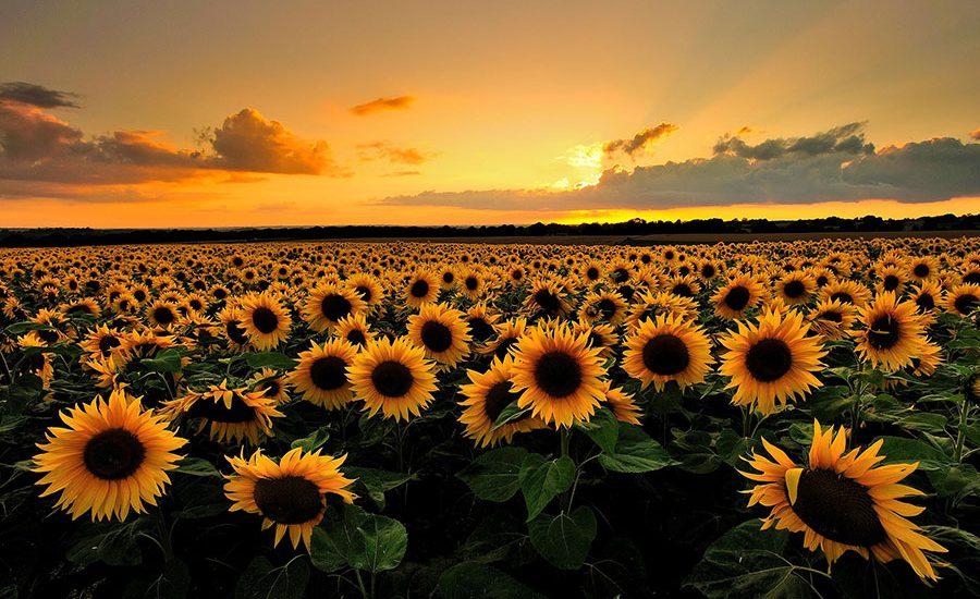 Jak dbać o kwiaty w upał
