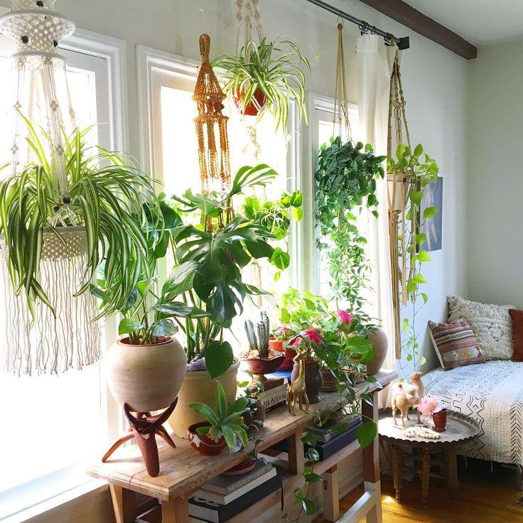 Pomysły na wniesienie natury do domu
