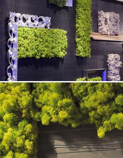 Zielone obrazy z mchu