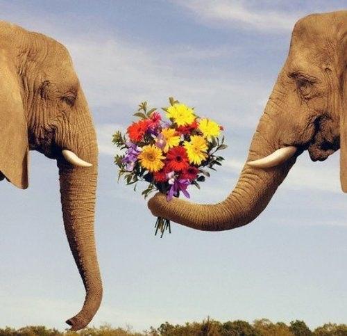 Podaruj kwiaty swojej miłości