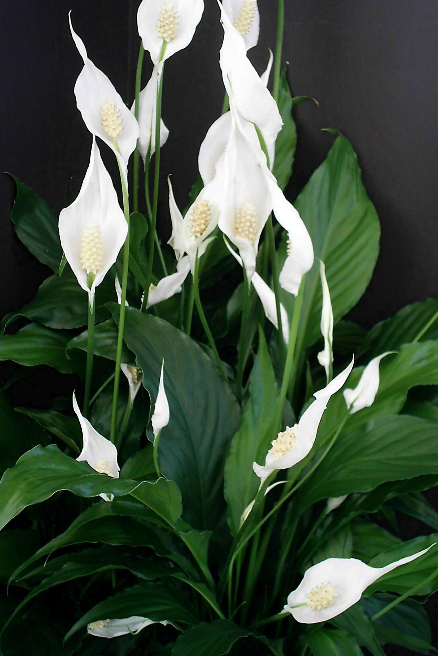 Kwiaty idealne do sypialni- produkcja tlenu w nocy