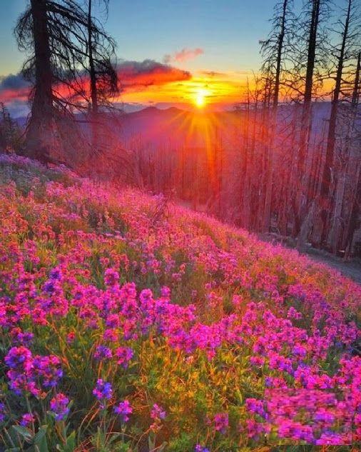 Niesamowite uroki natury