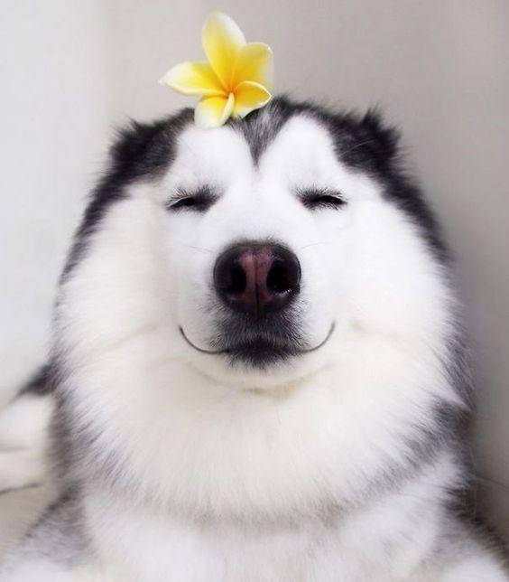 Coś dla miłośników kwiatów i czworonogów