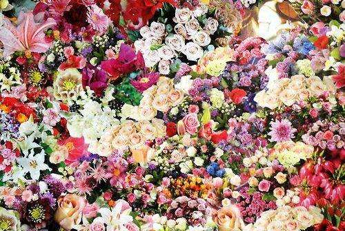 Co warto wiedzieć o barwach we florystyce?