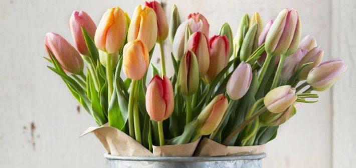 Triki dzięki którym przedłużysz świeży wygląd tulipanów.