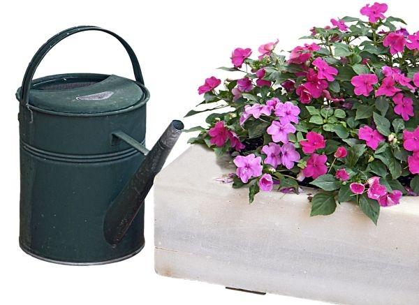 podlewanie kwiatów w upały