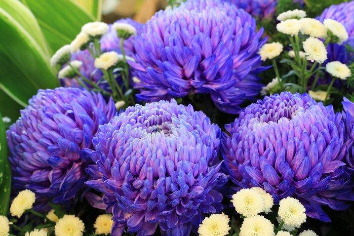 Jakie kwiaty kupić na grób?