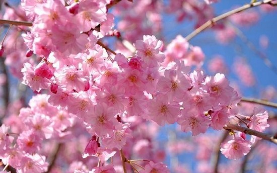najpiękniejsze kwiaty świata