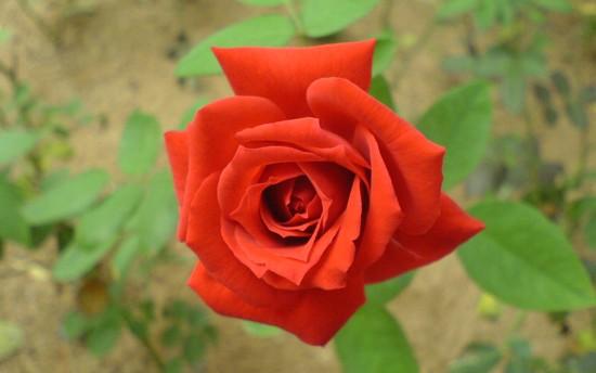 najpiekniejsze-kwiaty-na-swiecie