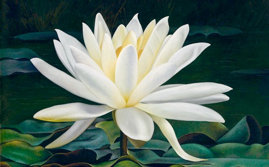 najpiękniejsze kwiaty świata- lotos