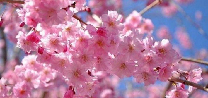 najpiękniejsze kwiaty na świecie