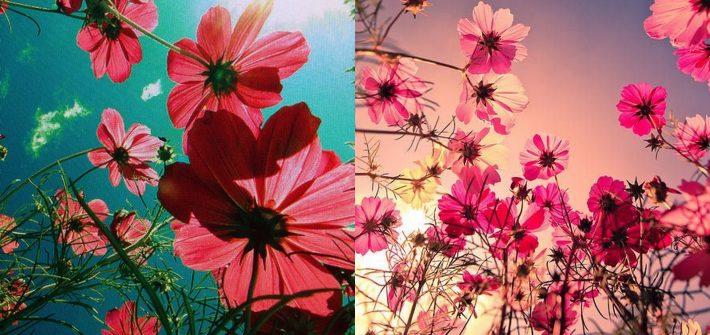 pielegnacja kwiatow w upaly