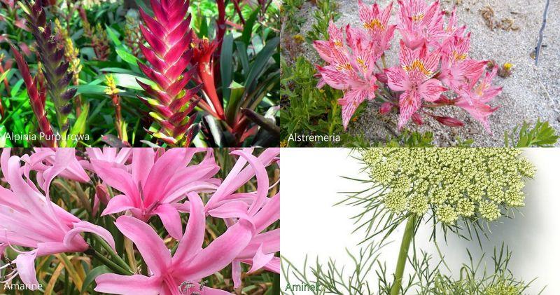 Nazwy Kwiatow Cietych We Florystyce Cz 1 Blog Florystyczny