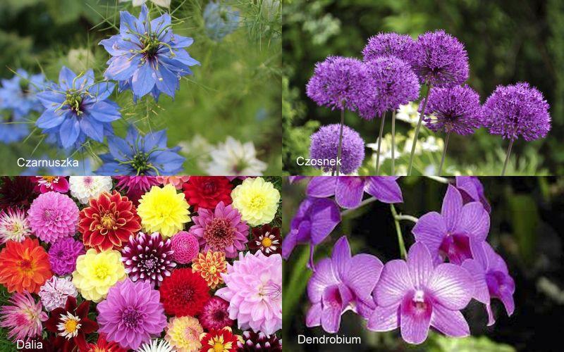 Nazwy Kwiatow Cietych We Florystyce Cz 3 Blog Florystyczny